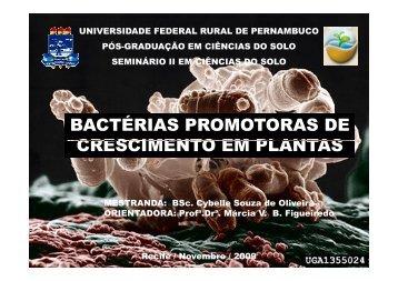 Bactérias Promotoras de Crescimento em Plantas (BPCPs)