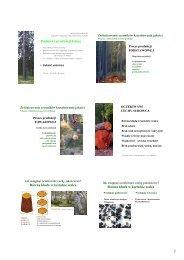 Wykład 7 Jakość i wartość surowca drzewnego