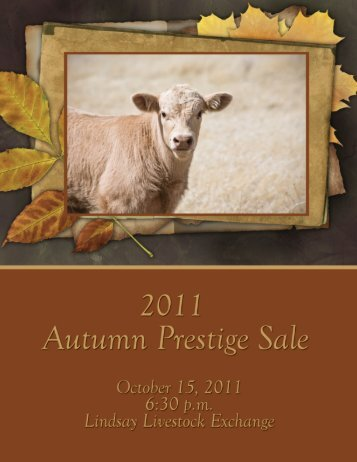 Autumn Prestige Sale - Charolais Banner