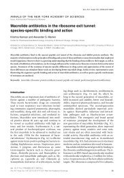 Macrolide antibiotics in the ribosome exit tunnel - Alexander Mankin ...