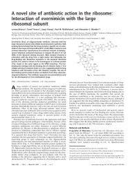 A novel site of antibiotic action in the ribosome: Interaction of ...