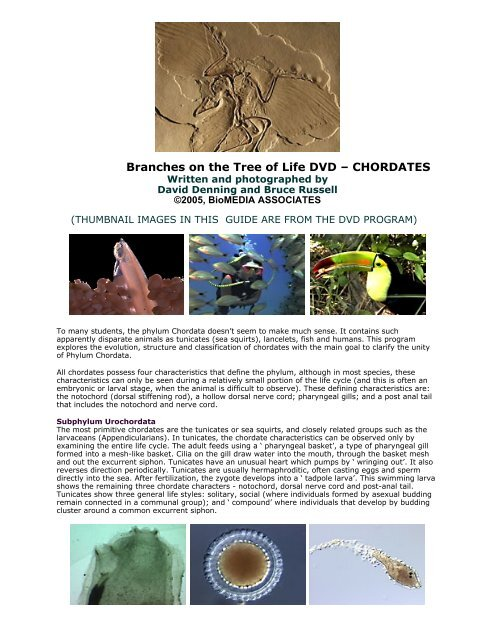 Biology of chordates video guide