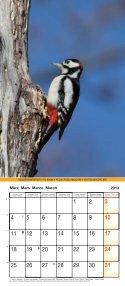 Birds 2013 - Page 4