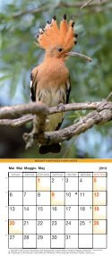 Birds 2013 - Page 6