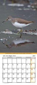 Birds 2013 - Page 7