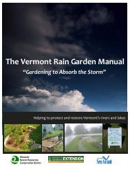 What is a rain garden? - Lake Champlain International