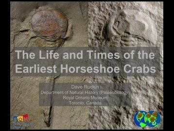 The Life and Times of the Earliest Horseshoe Crabs