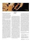Cupins - Revista Pesquisa FAPESP - Page 4