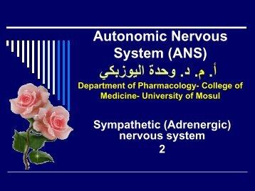 Autonomic Nervous System (ANS)