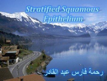 Stratified Epithelium