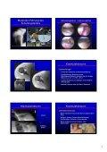 Schulter- gürtel Schulter- gürtel - Seite 7