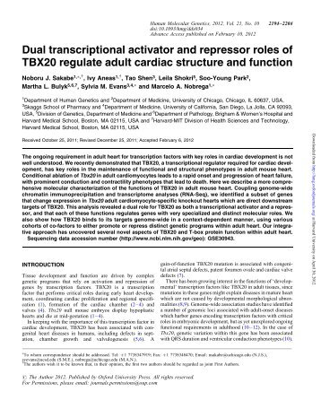Dual transcriptional activator and repressor roles of TBX20 regulate ...