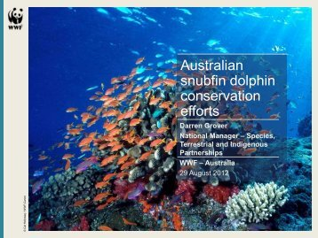 Snubfin dolphin injuries in Roebuck Bay - WWF