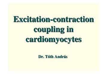 Excitation-contraction coupling in cardiomyocytes