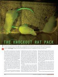 The rat is the preferred model organism in many ... - eliedolgin.com