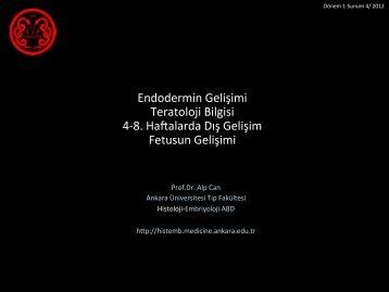 Fetus Dönemi - Ankara Üniversitesi Tıp Fakültesi