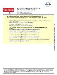 Regulation of an ATG7–beclin 1 Program of Autophagic Cell Death ...