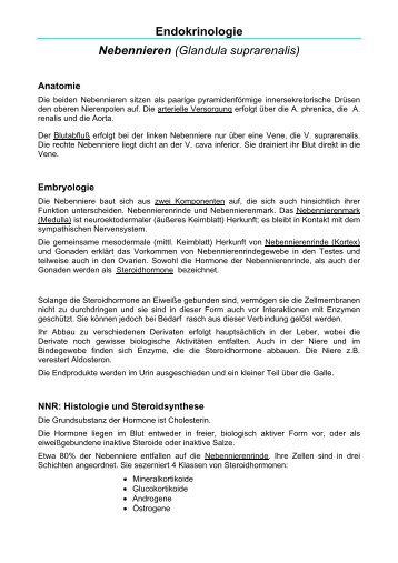 Endokrinologie Nebennieren (Glandula suprarenalis) - bernd-abel.info