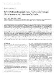 J. Neurosci. 28:6592-6606 - University of British Columbia