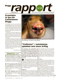 Doggy Rapport 1