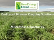 Miscanthus Opportunity Dedicated Biomass Cropping Solutions