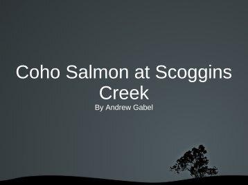 May 2012 Coho Salmon at Scoggins Creek