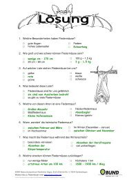 Rätsels Lösung als PDF-File - All about Bats