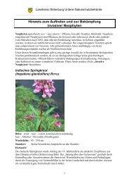 Hinweis zum Auftreten und zur Bekämpfung invasiver Neophyten