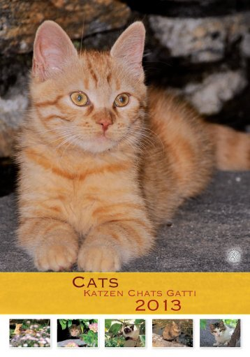 Cats 2013
