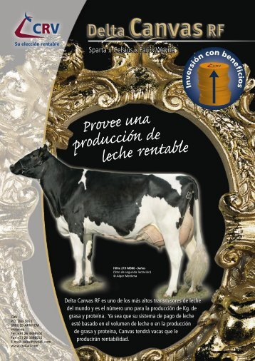Canvas, vacas supremas en leche