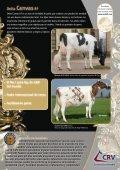 Canvas, vacas supremas en leche - Page 2
