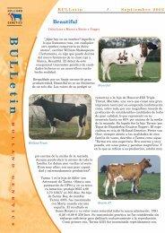 boletín toros holandeses beautiful - Reproducción Animal