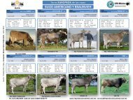 Swiss Brown cattle Breeders´s Federation