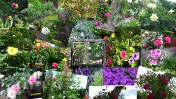 Natur und Blumen