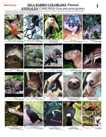 ISLA BARRO COLORADO, Panamá ANIMALES COMUNES: Guía ...