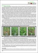 Procafé - Estações Apresentadas 2009.cdr - Fundação Procafé - Page 4
