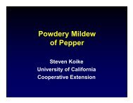 Powdery Mildew of Pepper - University of California Cooperative ...