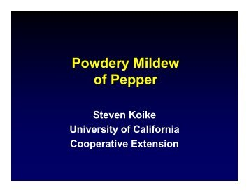 Powdery Mildew of Pepper - University of California Cooperative ...
