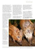 "Wild boar "" - Reforesting Scotland - Page 2"