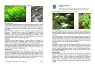Merkblatt invasive Neophyten (gebietsfremde Pflanzen)