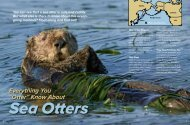 "Everything You ""Otter"" Know About - Suzi Eszterhas"