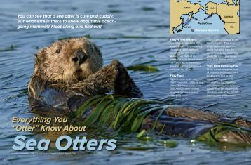 "Everything You ""Otter"" Know About - Suzi Eszterhas"