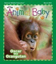 Oscar Orangutan - Suzi Eszterhas