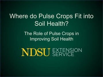2013 Pulse Crops Soil Health by Chris Augustin