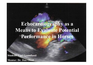 Echocardiography as a Means to Evaluate Potential Performance in ...