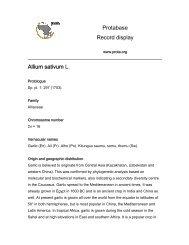 Protabase Record display Allium sativum L. - prota4u