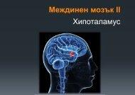 Междинен мозък ІІ Хипоталамус