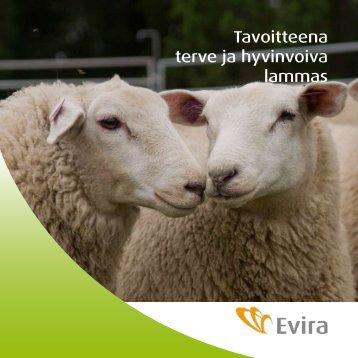 Tavoitteena terve ja hyvinvoiva lammas