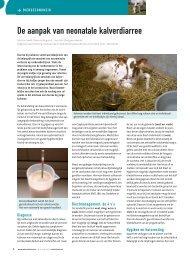 de aanpak van neonatale kalverdiarree - Melkveebedrijf