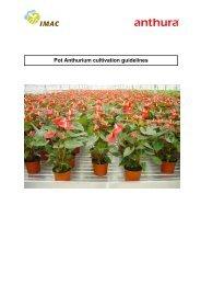 Pot Anthurium cultivation guidelines - Sprint Horticulture